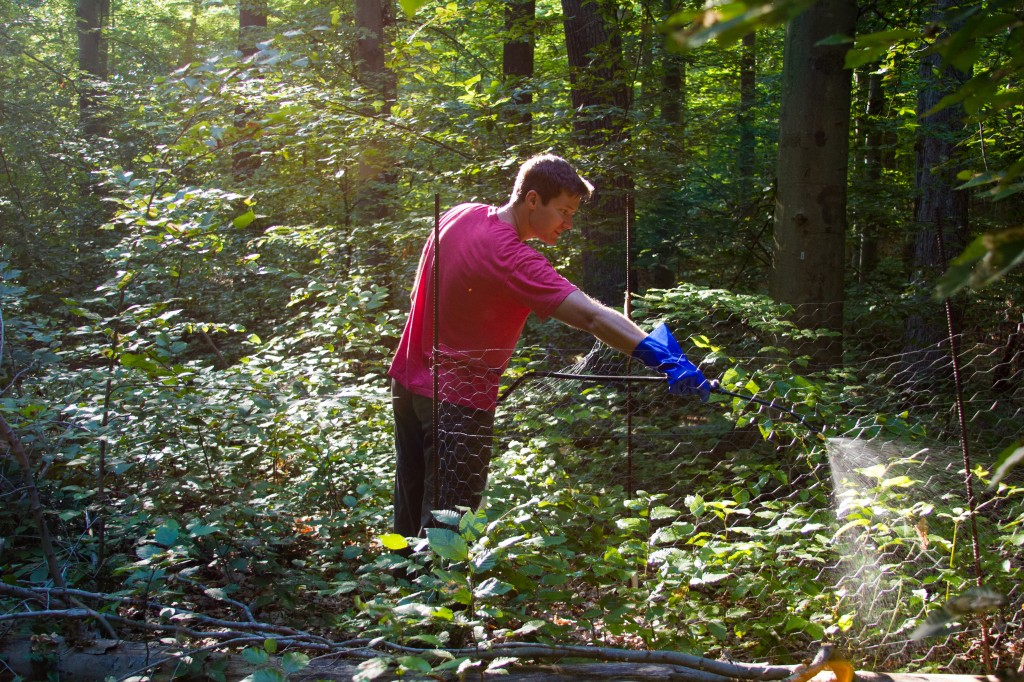 Nate Lemoine, FIU PhD candidate and Smithsonian researcher, sprays treefall gaps within the Smithsonian Environmental Research Center with herbicide. Photos by D. Doublet